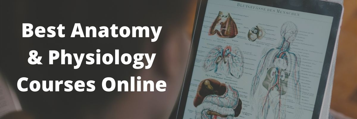 online anatomy physiology courses